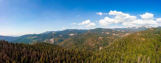 Panoramic shot of the beautiful forest on a sunny day