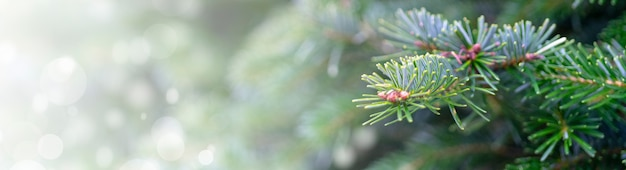 Panoramic shot of a christmas tree - perfect for background