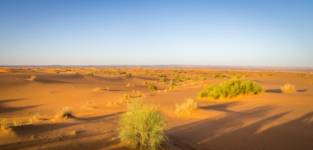 Panoramic shot of the erg chebbi dunes, the sahara desert, morocco