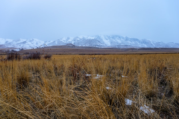 Panoramic shot of a grassland with  snow covered mountains in the background