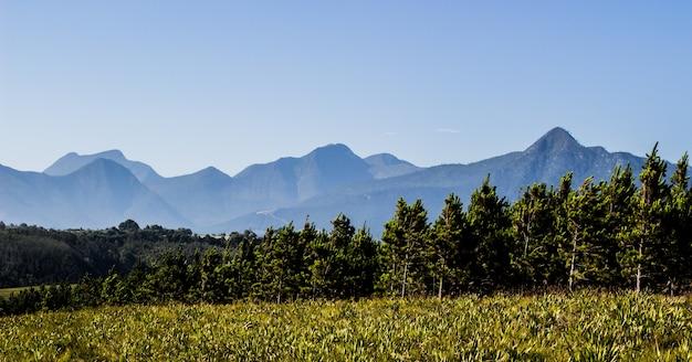 Foto panoramica delle montagne dietro gli alberi e un campo