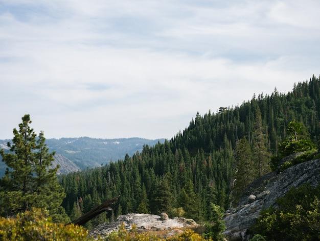 曇り空の下の斜面にある緑の松の木のパノラマ写真