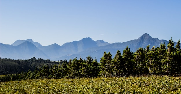 나무와 필드 뒤에 산의 파노라마 샷