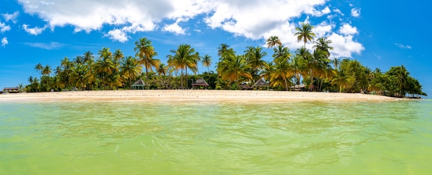 Panoramic shot of the sea and the shore covered in palm trees captured on a sunny day