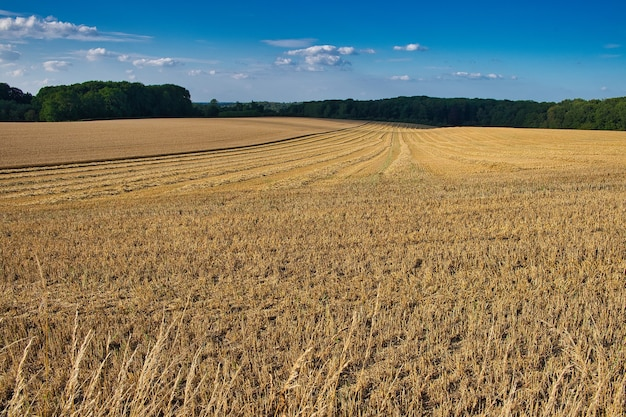 Panoramic shot of a very wide farm field that has just been harvested with trees on edge