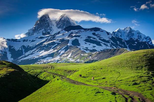 Ushba 산의 눈 덮인 봉우리가 있는 탁 트인 여름 풍경. 주요 백인 능선, zemo svaneti, 조지아. 코카서스 산기슭의 푸른 언덕과 산악 트레킹 코스.