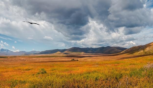 흐린 하늘 아래 햇볕에 쬐인 금빛 큰 계곡이 있는 탁 트인 햇살 가득한 가지각색의 가을 풍경. 단풍에 황금빛 햇살에 아름다운 높은 산과 멋진 고산 풍경.