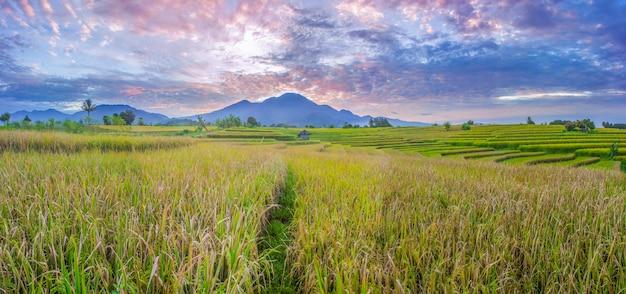 パノラマインドネシアの美しい山々と朝の緑の田んぼの広大な広がり