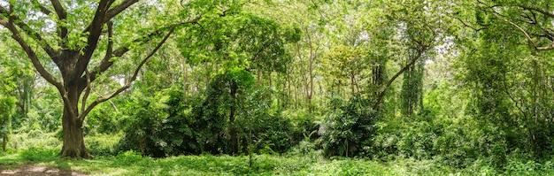 태국에서 파노라마 열 대 우림 정글 프리미엄 사진