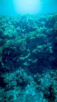 아름다운 산호초와 수영하는 열대어의 탁 트인 수중 사진