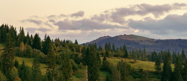 Panoramic view of carpathian mountains pine forest after sunset with cloudy sky