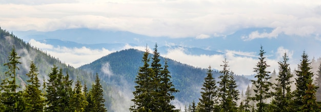 Panoramic view of foggy carpathian mountains with low clouds