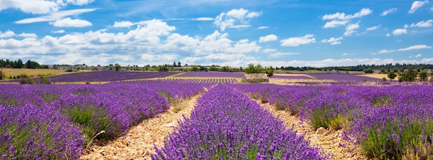 Panoramic view of lavender field and cloudy sky, france