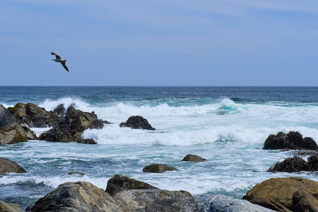 Panoramic view of the ocean waves hitting the rocks on the shore with great force a bird flying in the blue sky. selective focus