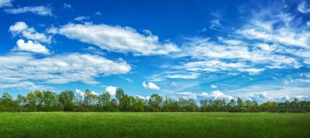 日光と曇り空の下で草や木々に覆われたフィールドのパノラマビュー