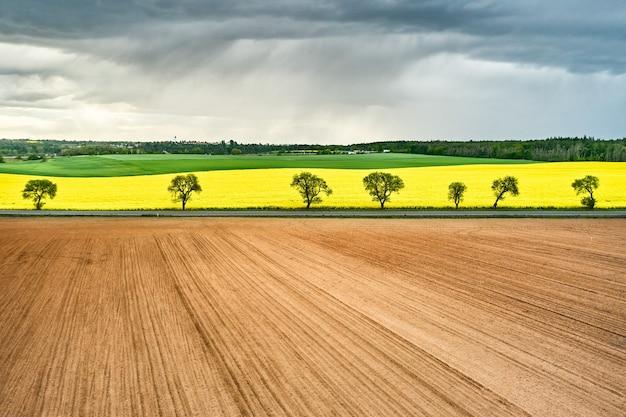 Панорамный вид на пустые и желтые поля рапса