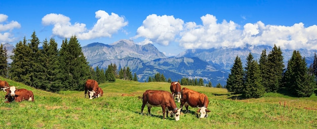 牛とフランスアルプスのパノラマビュー