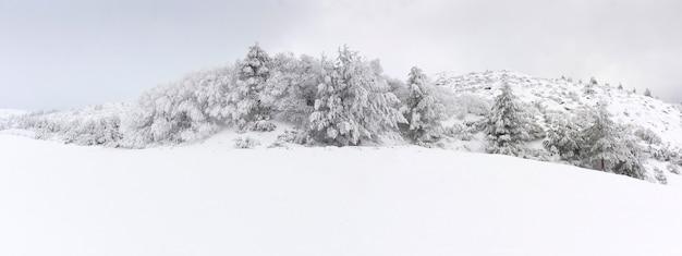 Панорамный вид на горный пейзаж и деревья, полностью покрытые снегом. место для текста.