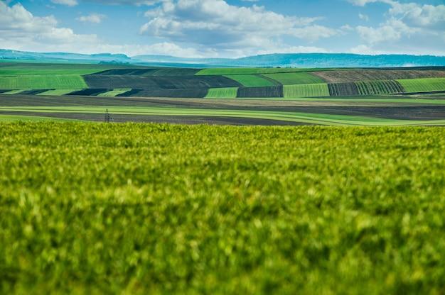 Панорамный вид лоскутных участков земли со стороны зеленого поля озимой пшеницы ранней весной