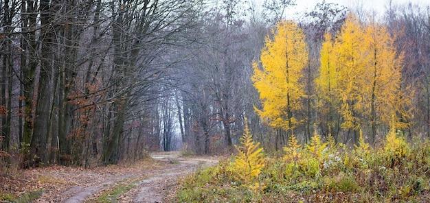秋の森の全景。秋の森の木々の間の道_