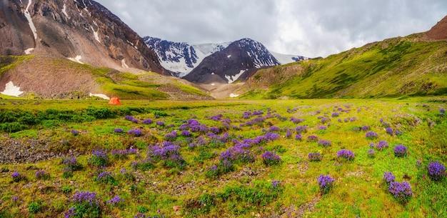 花の緑の高地高原でのキャンプのパノラマビュー。雨の日のオレンジ色のテント。自然の中のどんな天候でも平和とリラクゼーション。