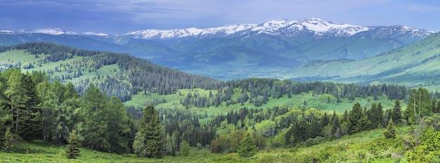 Панорамный вид на горную тайгу, алтай. летняя зелень лесов, заснеженные вершины.