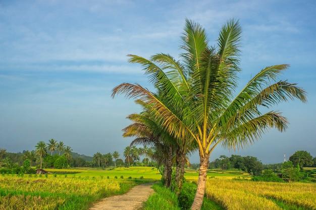 インドネシアの日の出の田んぼと山々の朝の雰囲気と田園地帯の自然の美しさのパノラマビュー