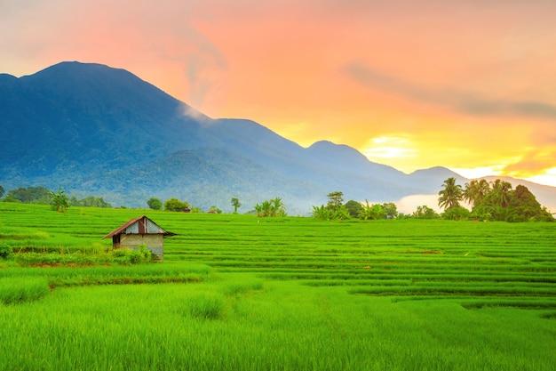 밝은 태양과 함께 아침에 논과 산이있는 마을의 전경