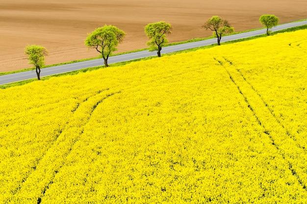 Панорамный вид на поля желтого рапса с деревьями
