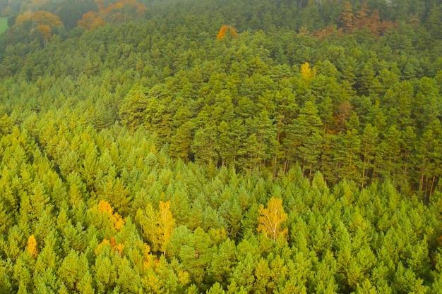 가을 또는 가을 안개 날씨에 주황색과 녹색 숲에서 파노라마보기.