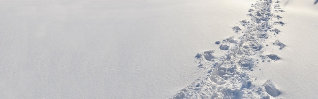 新雪の中を歩いたハイカーの足跡のパノラマビュー