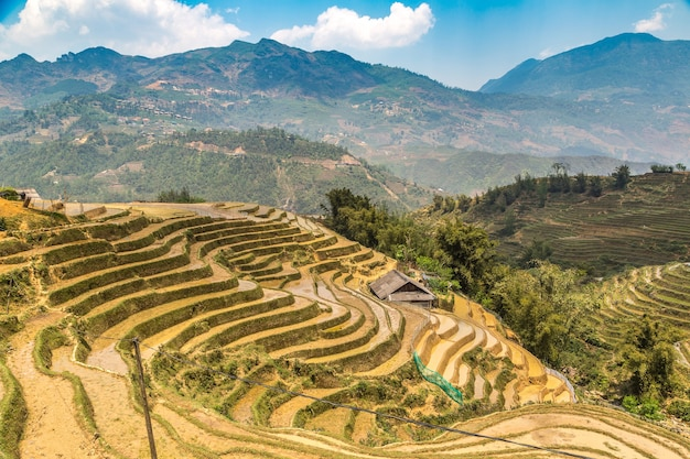 Panoramic view of terraced rice field in sapa, lao cai, vietnam
