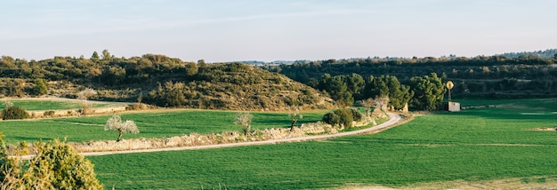 Panoramic view of wheat field with cabin and mill in spring
