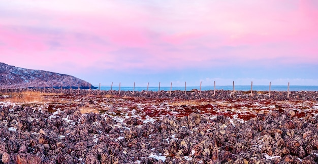 Panoramic view of wooden posts of the snow barrier. mountain landscape with tundra on the barents sea. teriberka. russia.