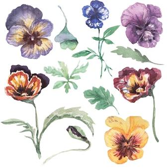 パンジー、花、花、植物。手描きの水彩イラスト。春。パープル、イエロー、ピンク