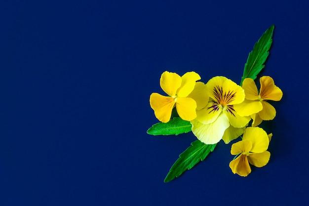 Pansy цветет состав на предпосылке голубой бумаги. скопируйте место для текста