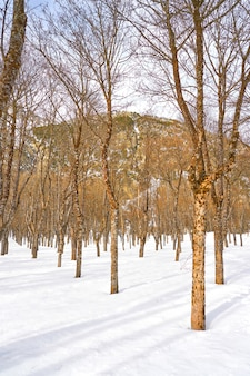 Panticosa snow ice in huesca pyrenees spain