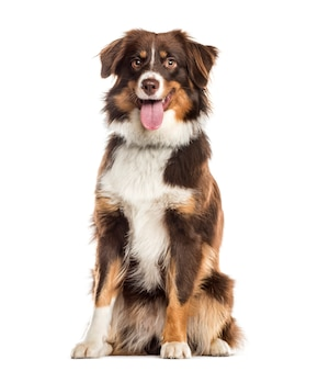 Panting mixed-breed dog sitting in front of the camera