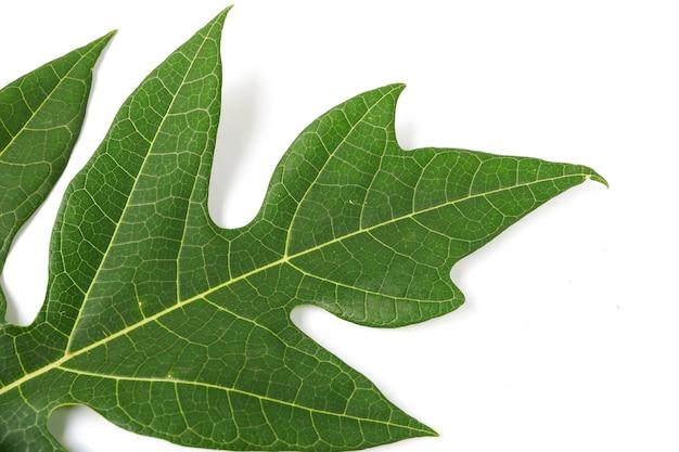白い背景で隔離のパパイヤの葉