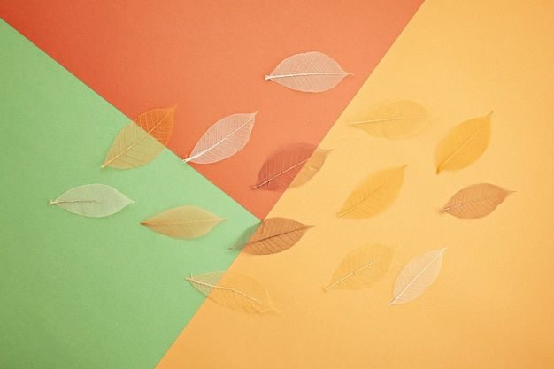 Paper in autumn colors with decoration