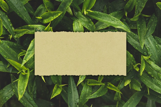 Paper card on a background of wet green leaves copy space.