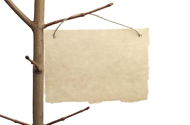 白で隔離の木の枝のクローズアップの発表のための紙