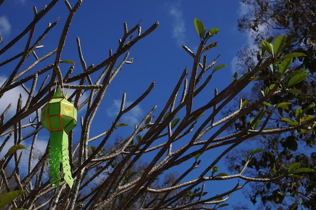 青い空を背景に提灯とプルメリアの枝。