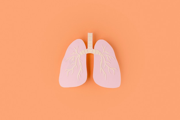 Paper made lungs isolated on orange