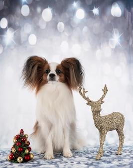 Собака papillon перед новогодним фоном