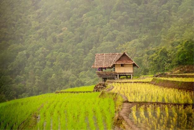 Рисовая терраса papongpeang к северу от таиланда