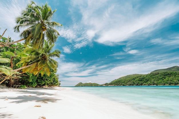 白い砂浜とヤシの木のあるパラダイスビーチ。青い海のラグーンと白い雲と空。