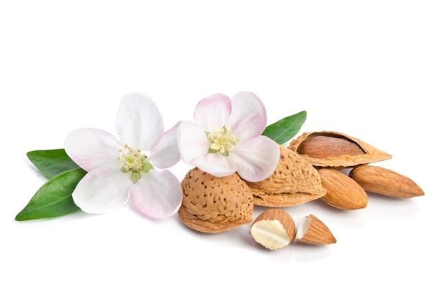白い背景で隔離のアーモンドナッツと楽園の花