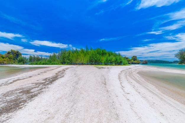 Paradise islandin krabi thailandの美しい砂浜のビーチと松の木の景色