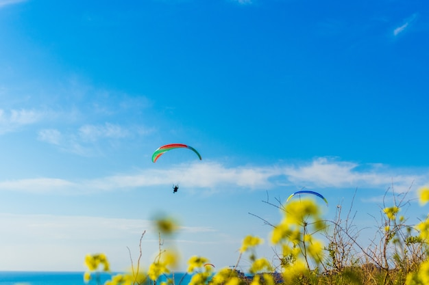 Параплан начинает парапланеризм со склона на фоне голубого неба с красочным крылом над золотой волной, колеопсисом копья, цветами.